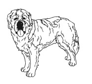 Dog Drawings For Engraving